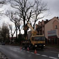 Przycinka drzew przy ul. Cieszyńskiej