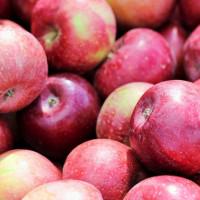 Rozdali jabłka, dziś powtórka!