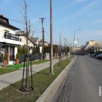 Nowe drzewa przy ul. Skłodowskiej